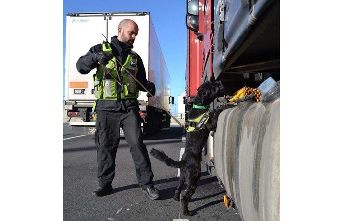 Officer and dog inspecting cargo